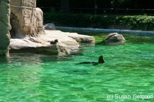 BronxZooBabySeal1 300x200 New York Staycation   Its all happening at the zoo